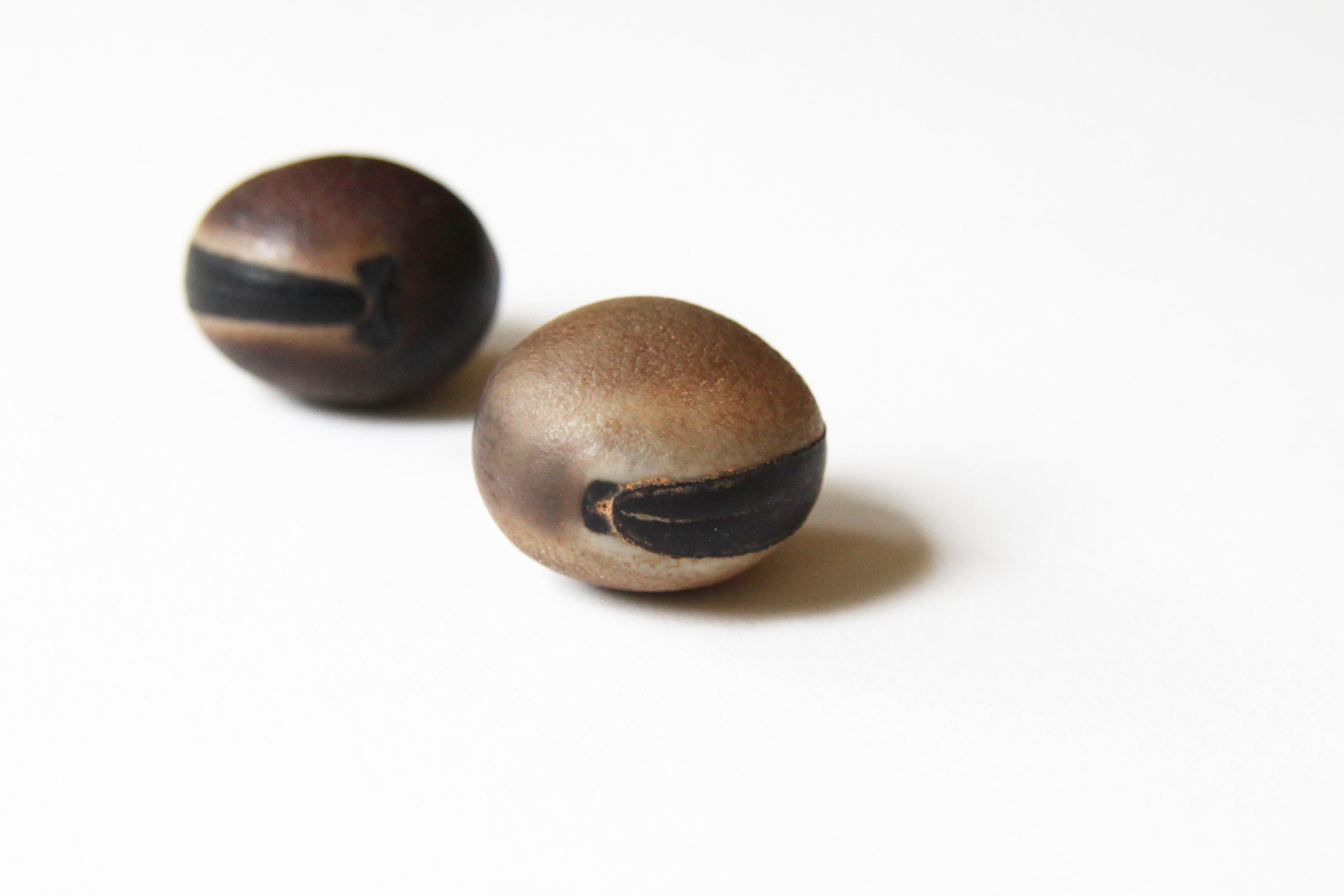 sea beans