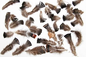 wild turkey breast feathers