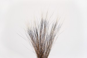 grey squirrel tail fur