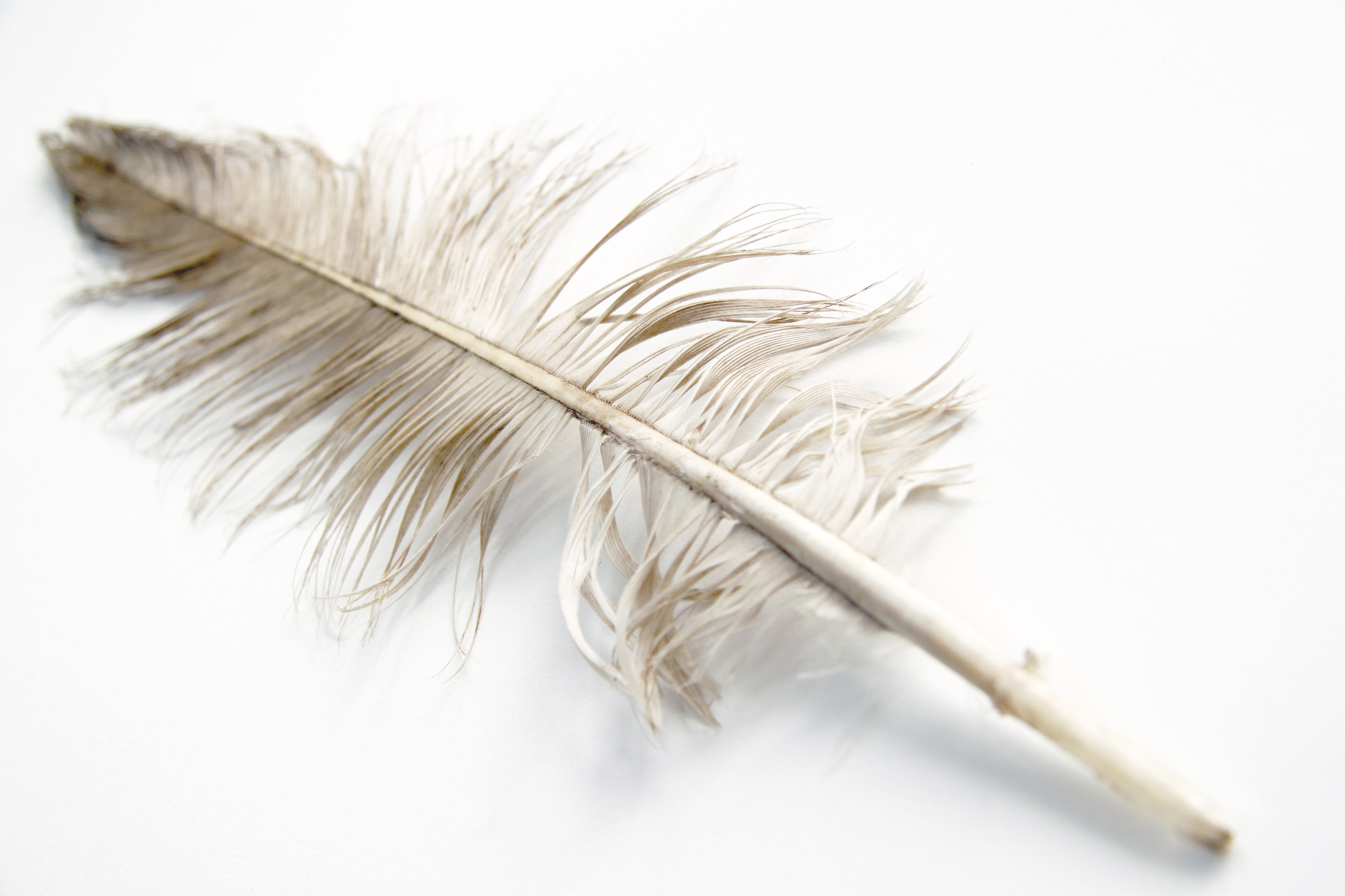 large white feather