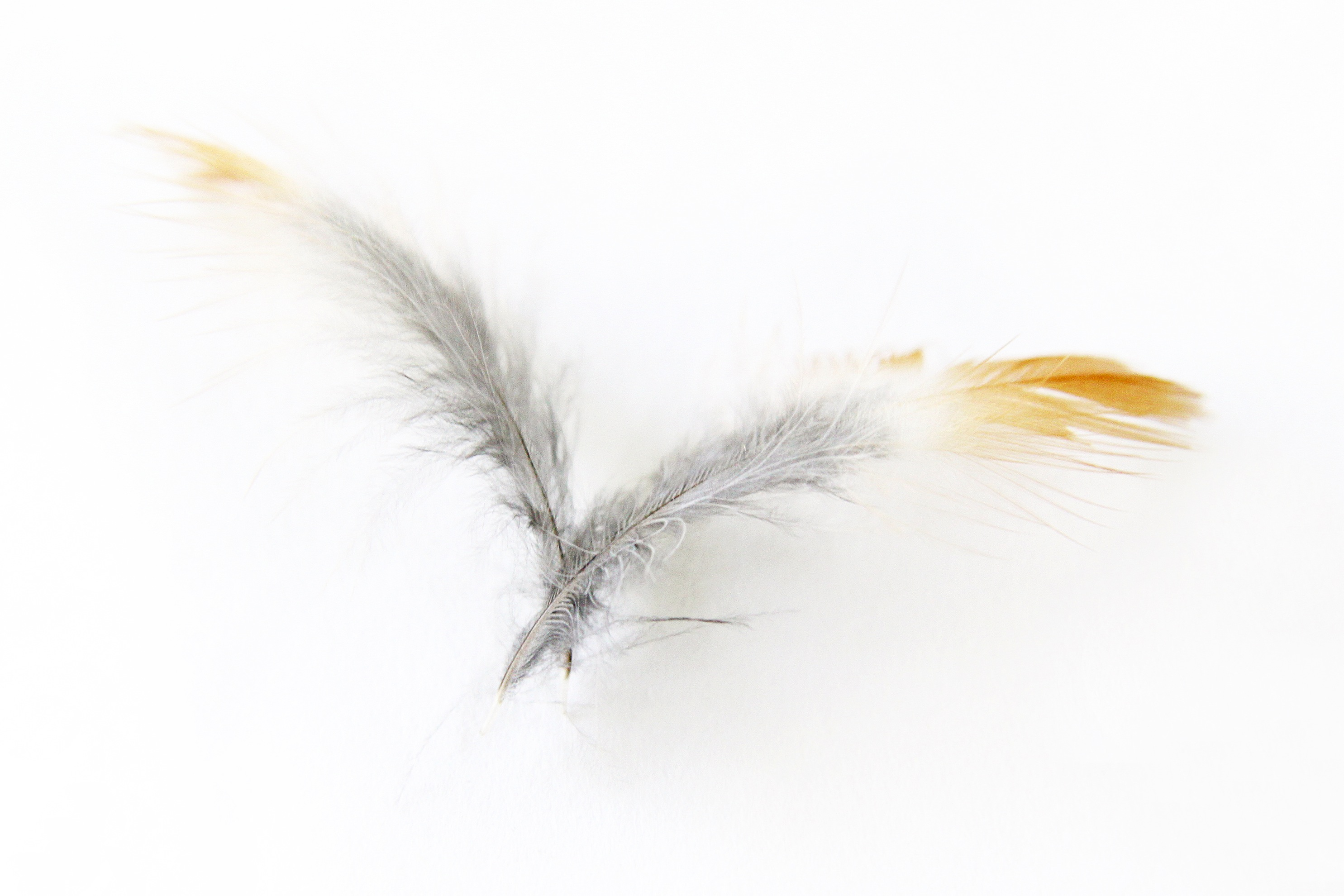 robin feathers