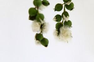 cottonwood fluff