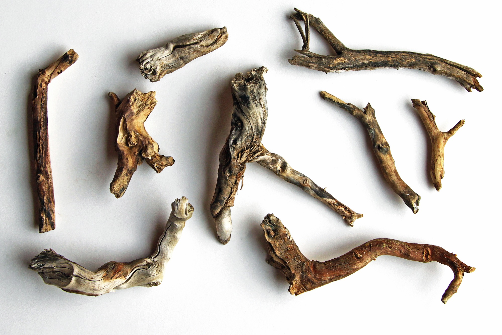 collection of desert twigs