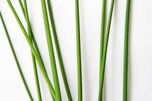 bulrush stems