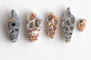 auger shells with tiny stones