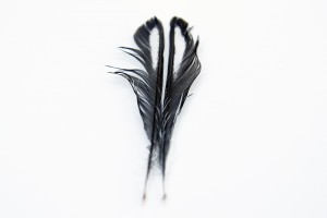junco feathers