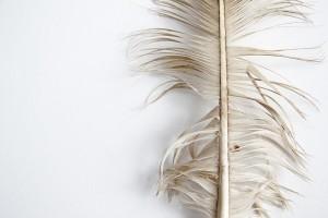 bald eagle tail feather