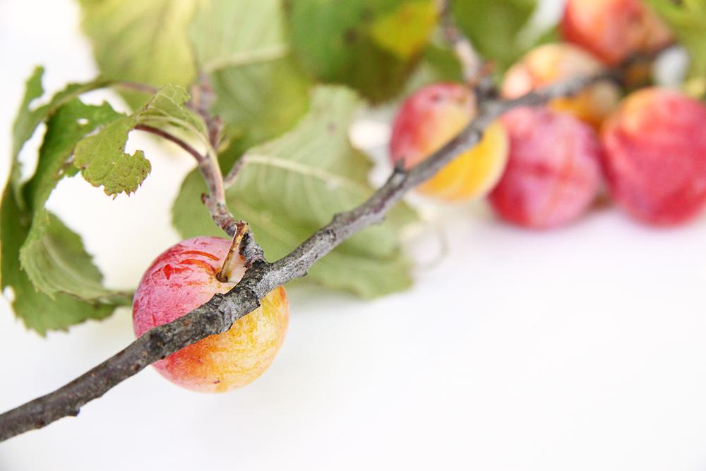wild plums