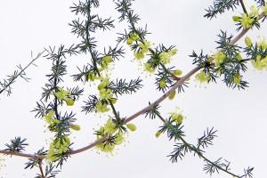 beauty among the thorns