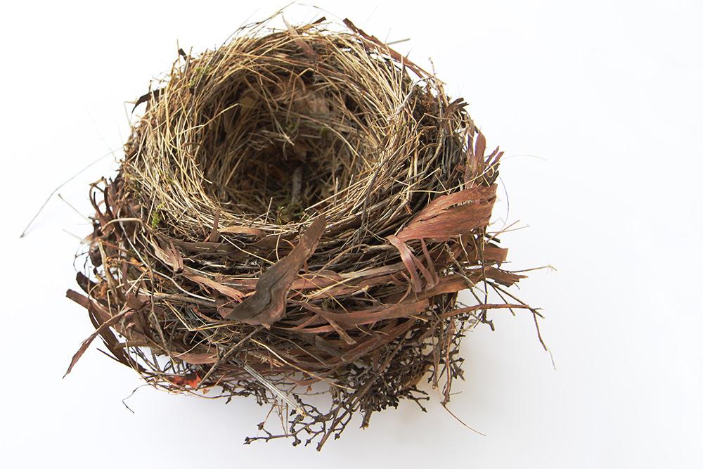 nid de merle (blackbird nest)