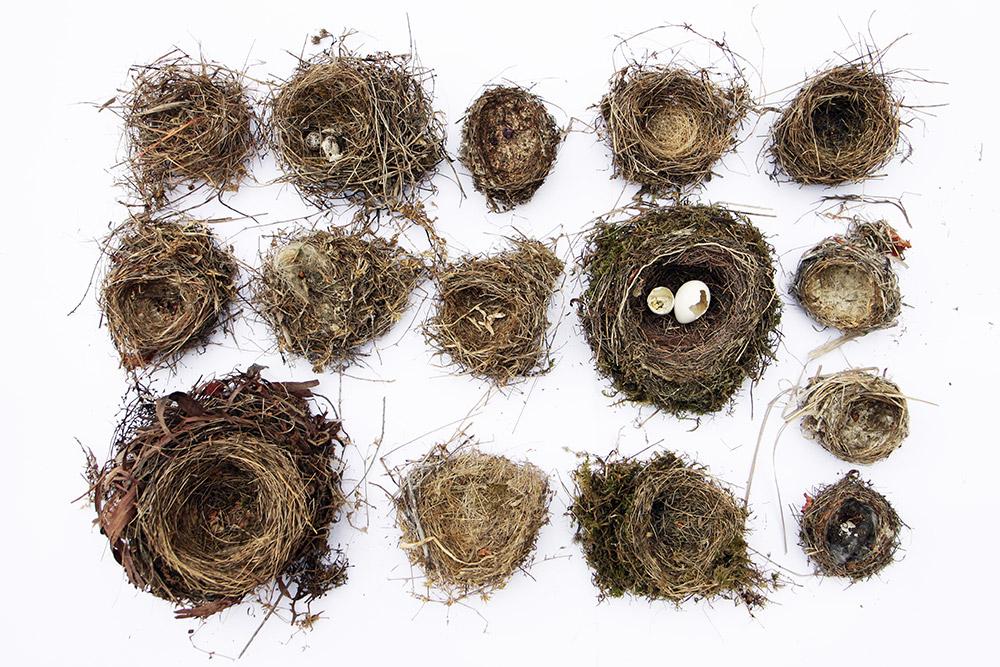 fifteen nests