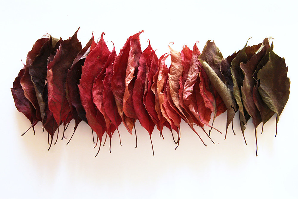 an extended autumn