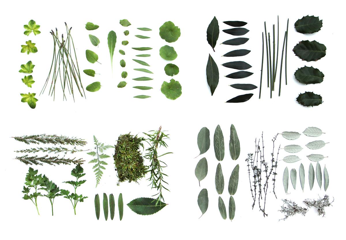 assemblage en vert