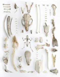 joseph's collection