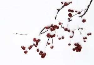 winter color