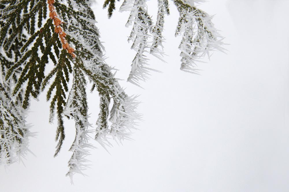 needle frost