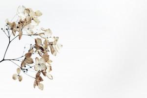 tethered moths