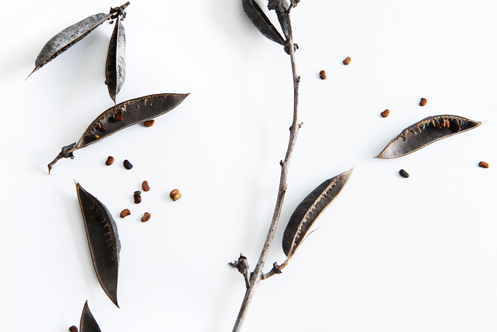 winter seeds