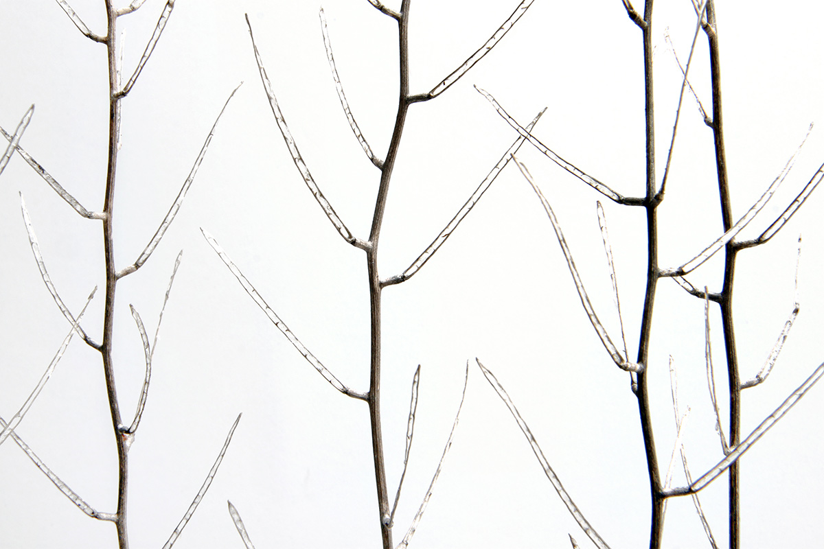 ghost branches