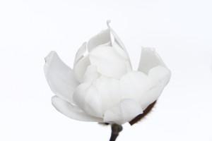 (bright) white on (cool) white