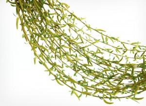 willow hammock