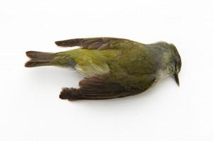 no more dead birds