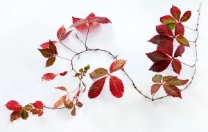 autumn in august