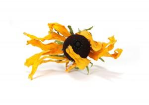 dark-hearted sunshine