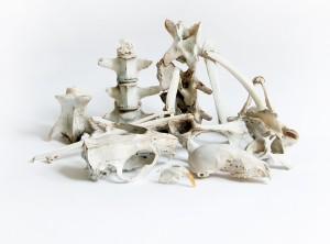 still life with bones