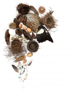 an avian collage