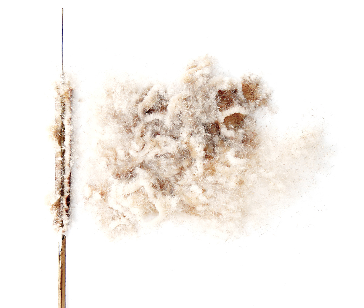 an explosion of wool