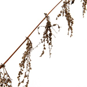 a tasseled garland