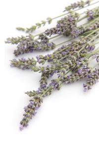 lavender photo. it's mandatory.