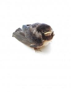 fledging is hard work
