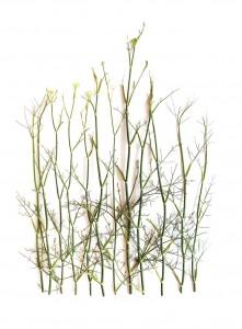 roadside weeds
