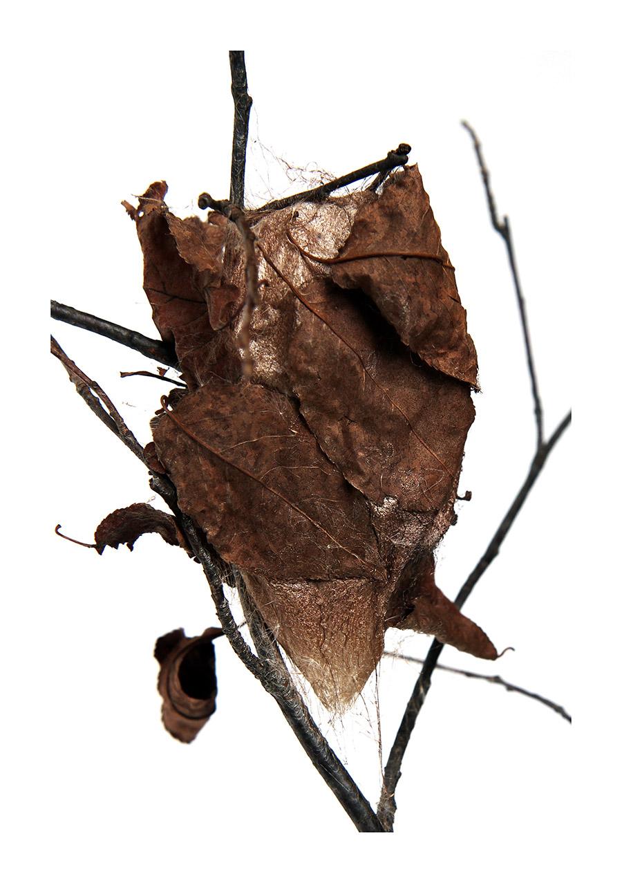 silk sheets under a leaf coverlet