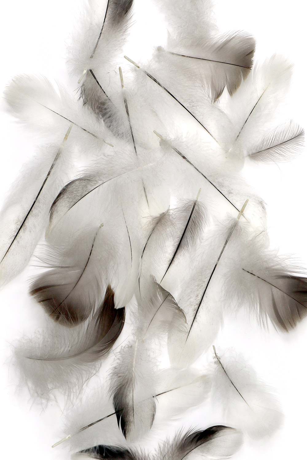 needles in a featherstack