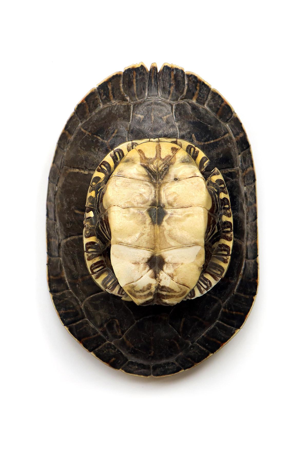 my shell