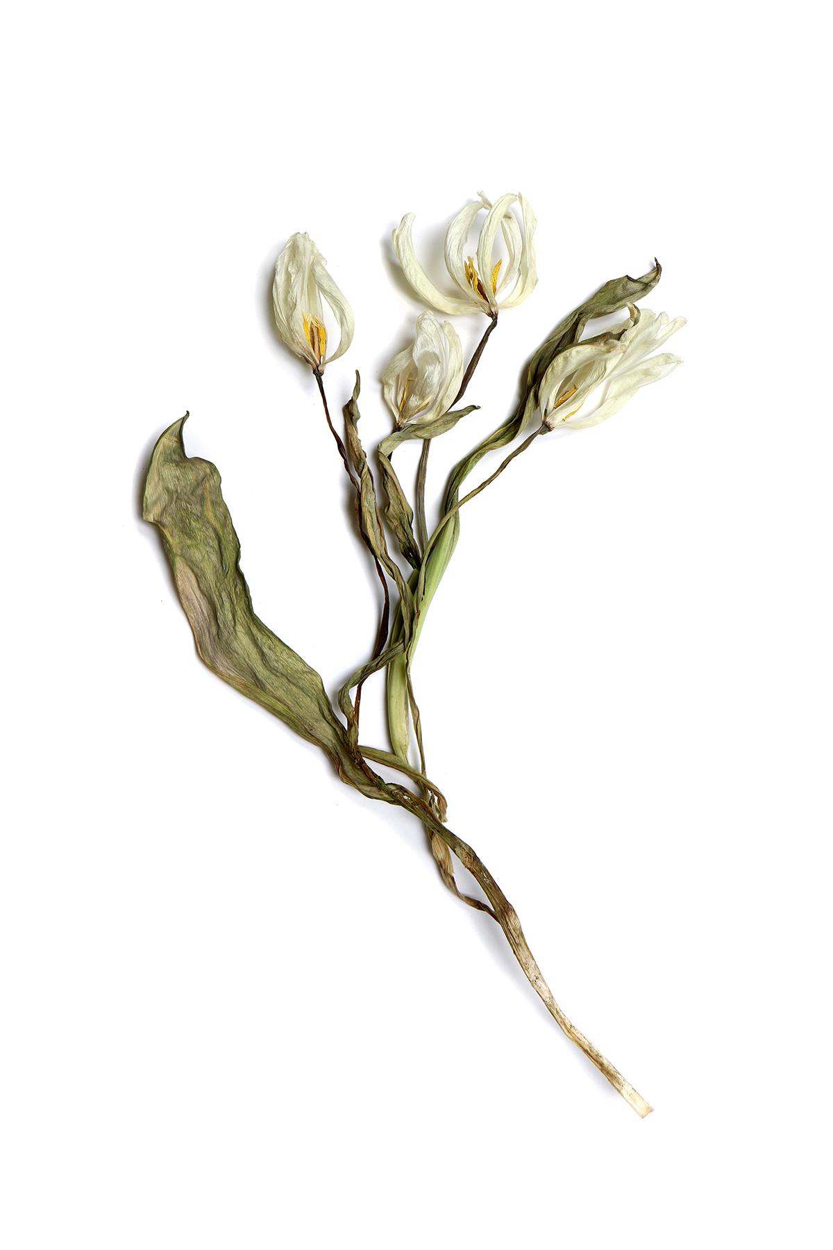 tissue paper tulips