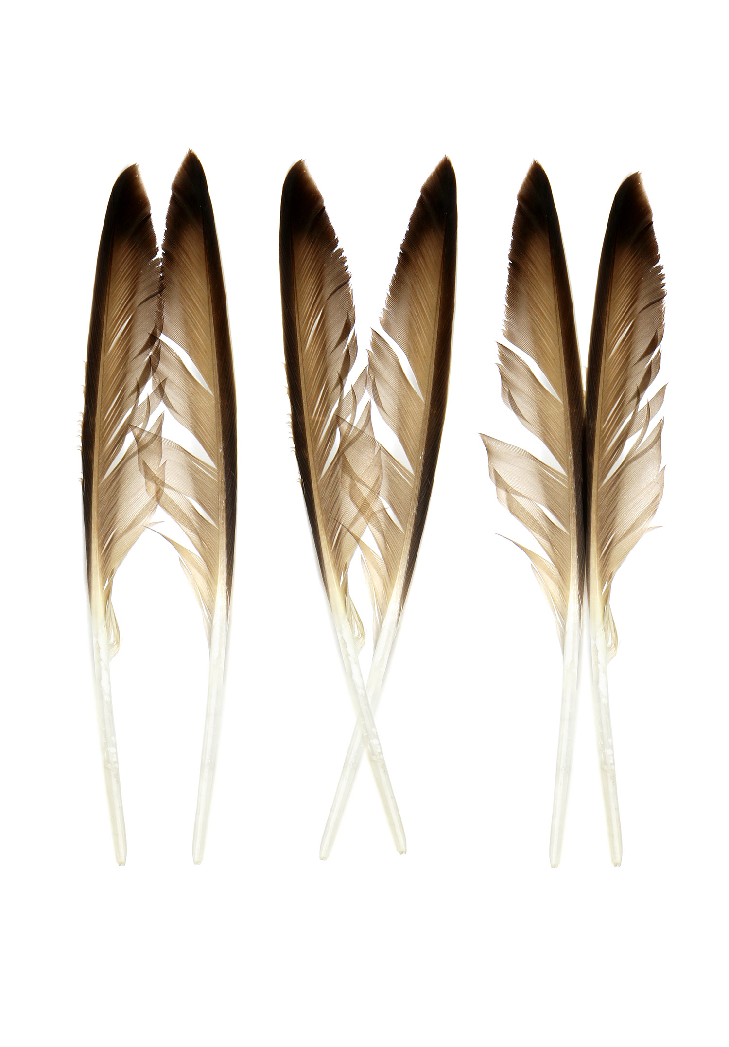 two feathers three ways