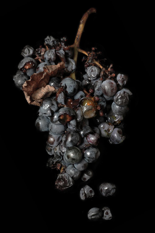 grapes ripe