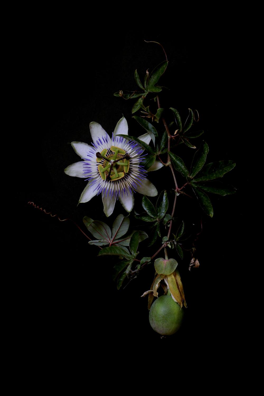 jet flower