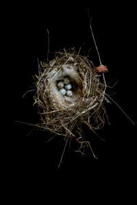 i'm still feathering my nest