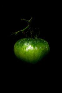 ripeness