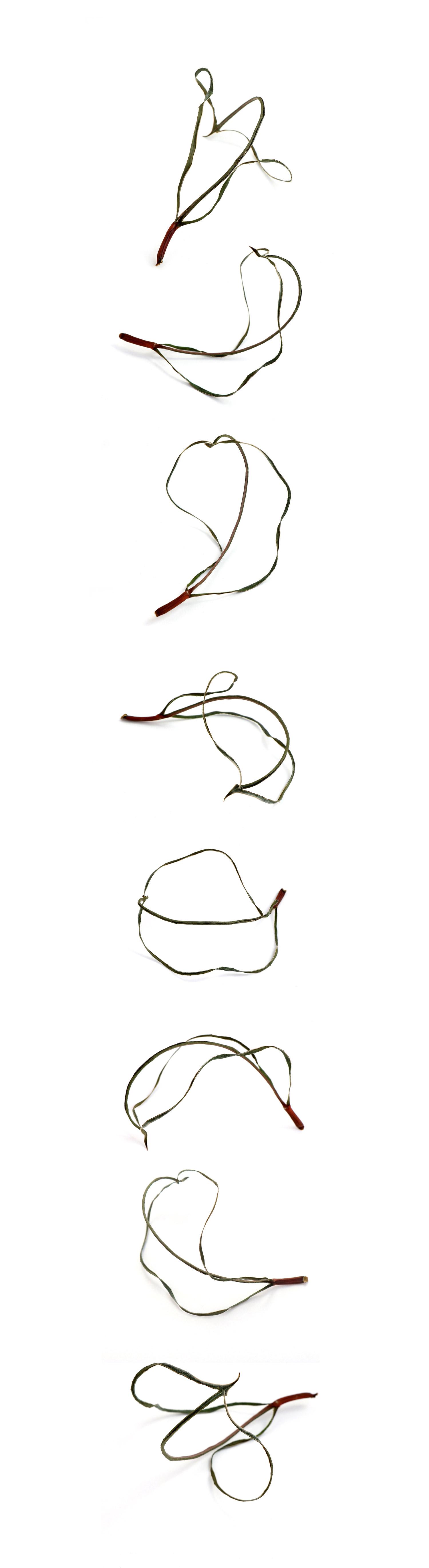 one leaf, eight ways