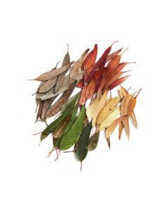 eucalyptus colored