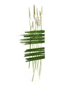 annual summer weaving