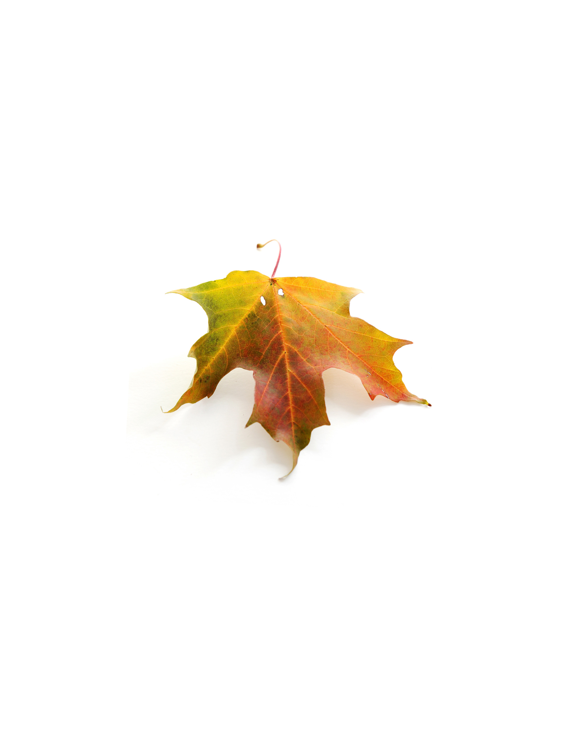 all of autumn in one leaf