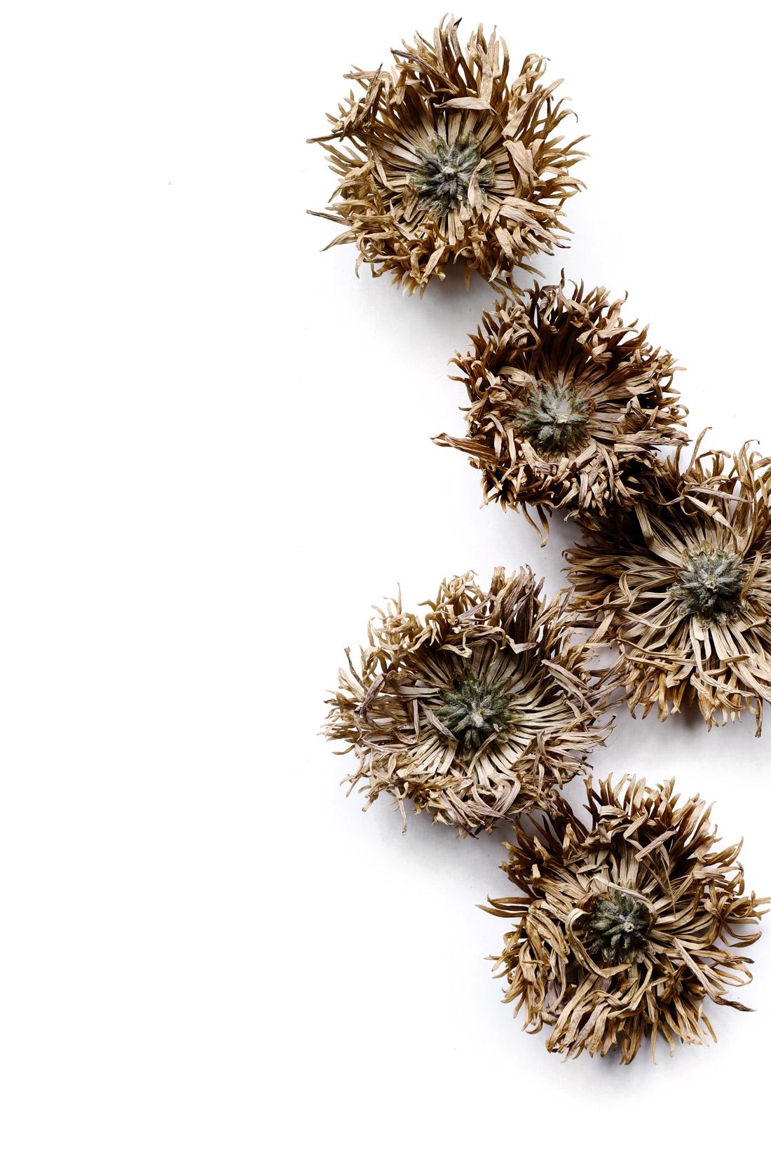 sea urchin mums
