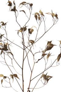 one stalk many branches